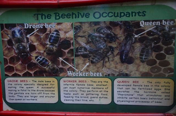 irawan eco park bee farm tour