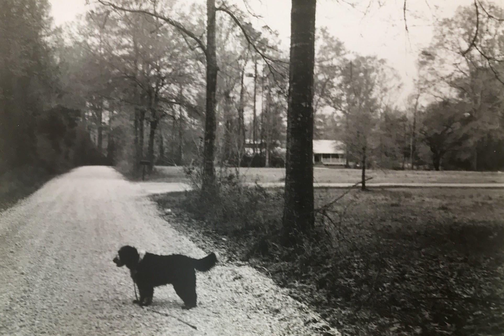 Dog walks on a gravel road