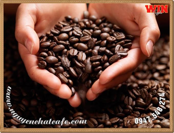 Ngày càng có nhiều người chọn cà phê hạt rang xay, cà phê nguyên chất làm thức uống hàng ngày, thay vì các loại cà phê độc hại như trước đây