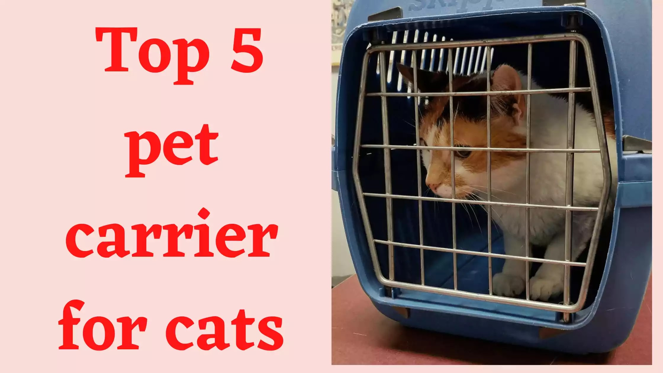 Pet carrier for cats