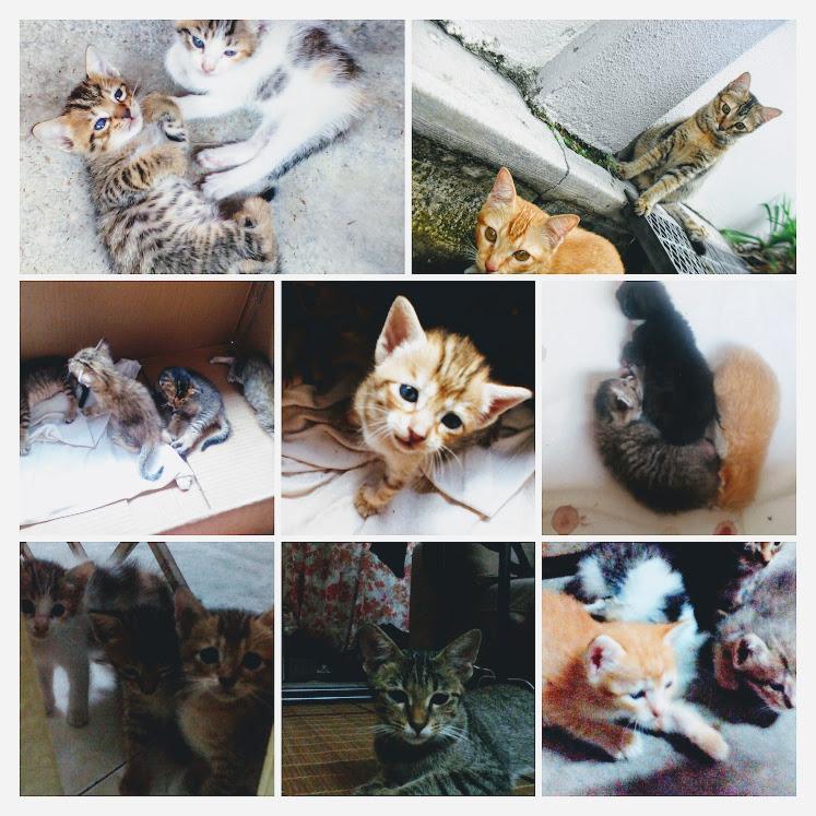 Meowlog Bagaimana Menjaga Anak Kucing Yang Baru Lahir How To Care Newborn Kitten