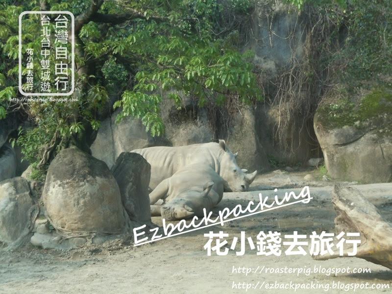 台北動物園必看10種動物:犀牛