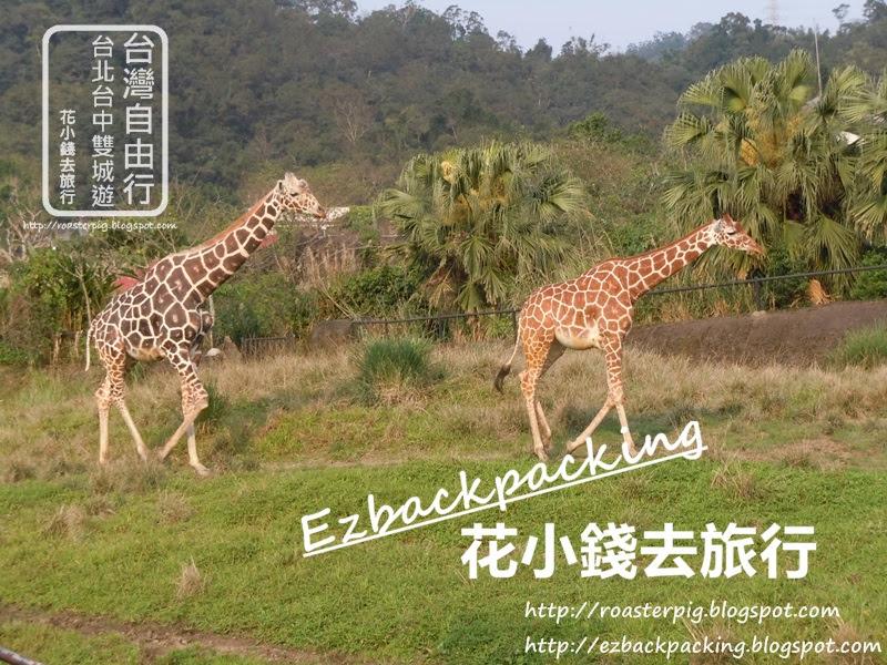 台北動物園必看10種動物:長頸鹿