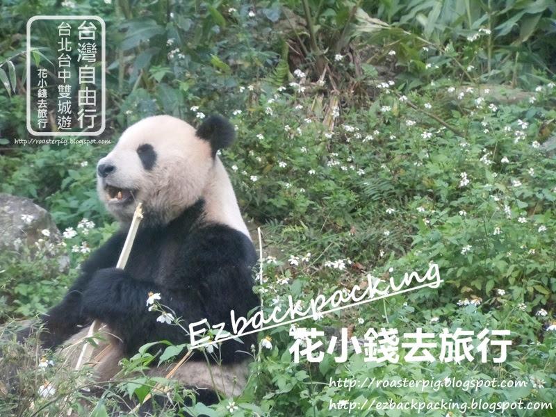 台北動物園熊貓
