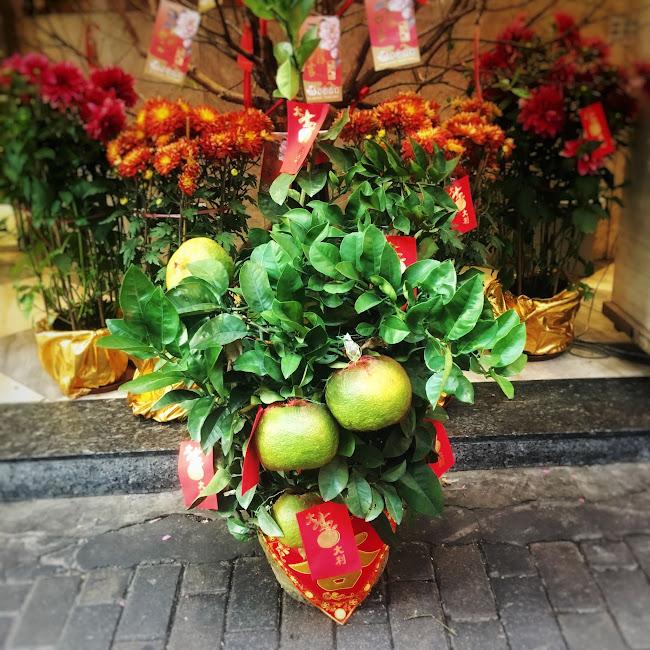 Chinese New Year, Lucky fruit, Auspicious, Pomelos,  中國新年, 柚子