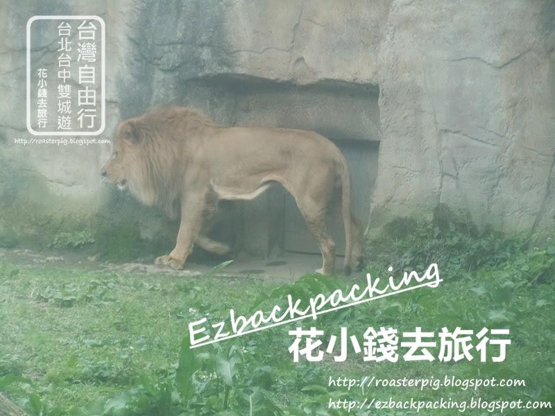 台北動物園獅子