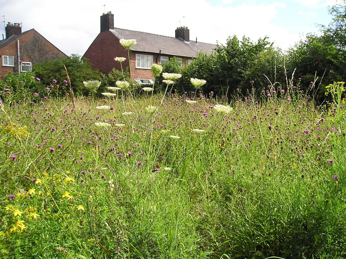 The meadow today