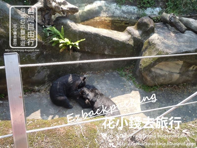 台北動物園必看10種動物:台灣黑熊