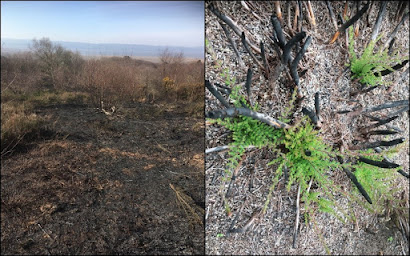 Burnt area in March (left) and in July (right)