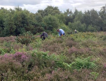 Volunteers at Cleaver Heath