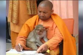 Image result for वृनॠदावन के बंदर के हाथ में परॠस