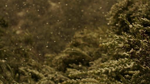 Nieve en el bosque esclerófilo