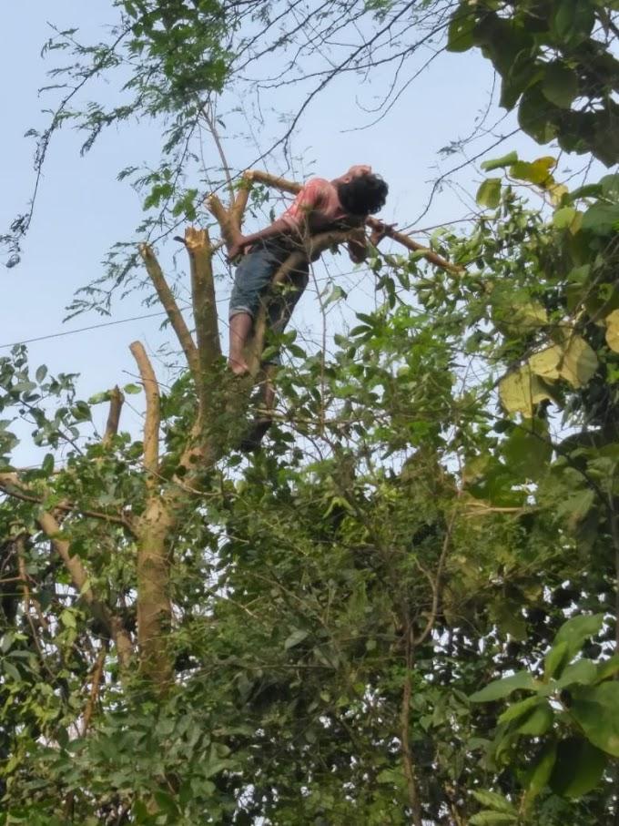 गूलर के पेड़ पर चढ़कर बकरियों के चारा के लिए हरे पत्ते वाली डाल काट रहे 17 वर्षीय बालक को करंट लगने से मौत